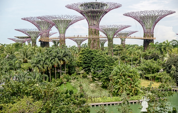 La SuperTree Grove vista dal Marina Sands Bay - Archivio Fotografico Pianeta Gaia
