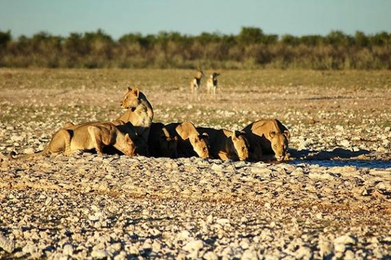 incontri Safari Melbourne 2014