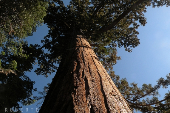 Parchi USA: Sequoia National Park
